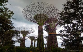 singapore-gardens-by-the-bay-supertree